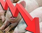 ЛПХ перестают заниматься свиноводством
