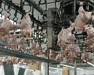 Россия увеличивает импорт мяса птицы