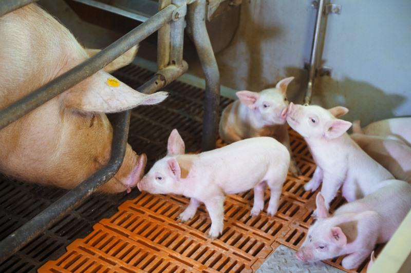 Во всех типах хозяйств сегодня применяется фазовое кормление с учётом возраста и периода выращивания