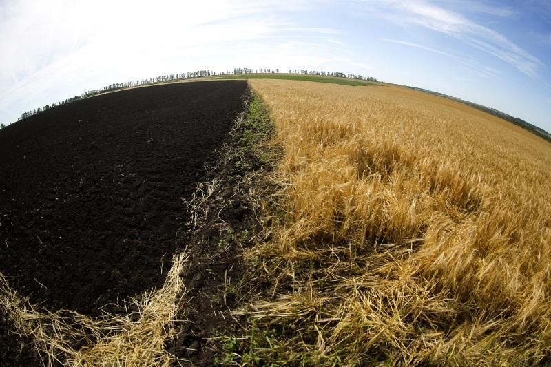сельхозземли поле