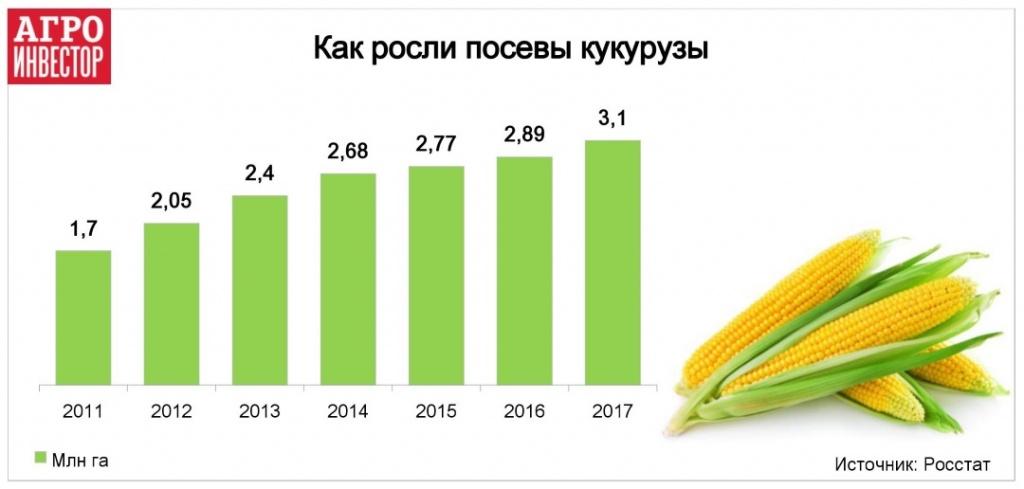 Как росли посевы кукурузы