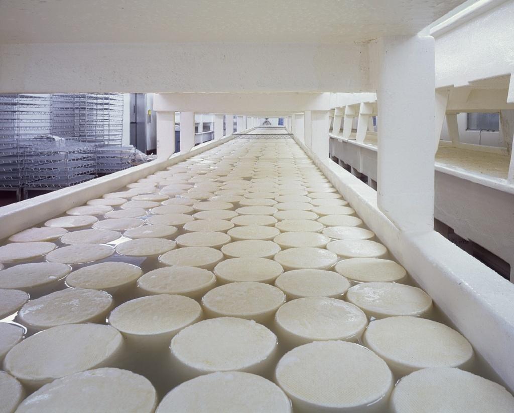 cheese-721145.jpg