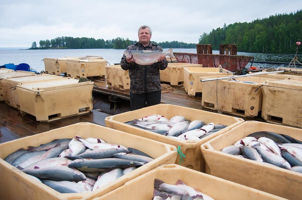 Рыболовное хозяйство