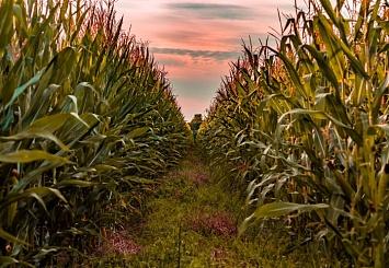 Партнерский материал: Syngenta: урожайность вэкспериментальных агрохозяйствах увеличилась почти на11%