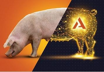 Партнерский материал. Компании Alltech и СГЦ Топ Ген приглашают на технический семинар по свиноводству
