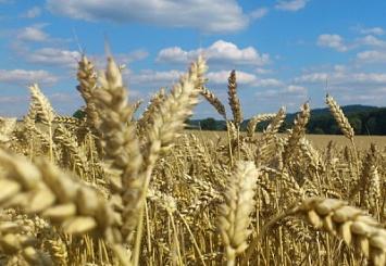 7июля в Московской области «Агрохолдинг-Истра» проводит «День поля»