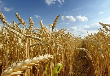 Партнерский материал. Маркетплейс поможет российским аграриям при продаже урожая-2019