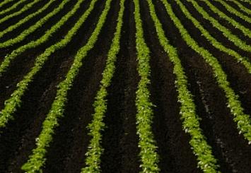 DuPont и Картофельный Союз приглашают Вас принять участие в мероприятии, посвященном препаратам компании DuPont для защиты картофеля и овощей открытого грунта