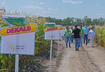 Партнерский материал. Огонь, вода и медные трубы: как новые гибриды кукурузы проходят испытания в условиях сезона-2019