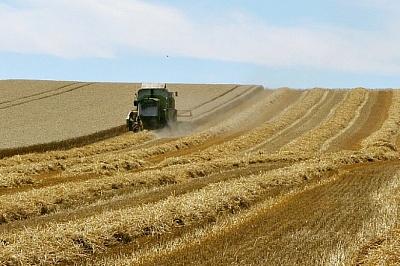Урожай-2018: Росстат оценил сборы основных агрокультур