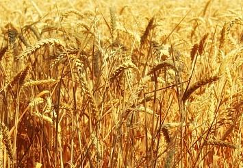Партнерский материал. Российский зерновой союз приглашает на«Grain Session-30»