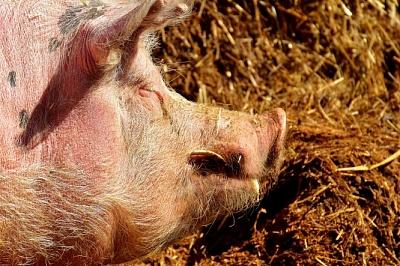Россия vs Евросоюз: спор из-за свинины