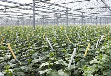Партнерский материал. Агроподразделение BASF увеличит продажи на 50%