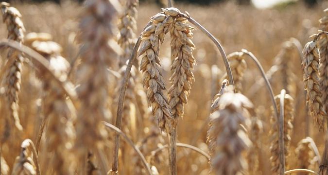 Партнерский материал. До конца сезона по квоте осталось вывезти 700 тысяч тонн зерна