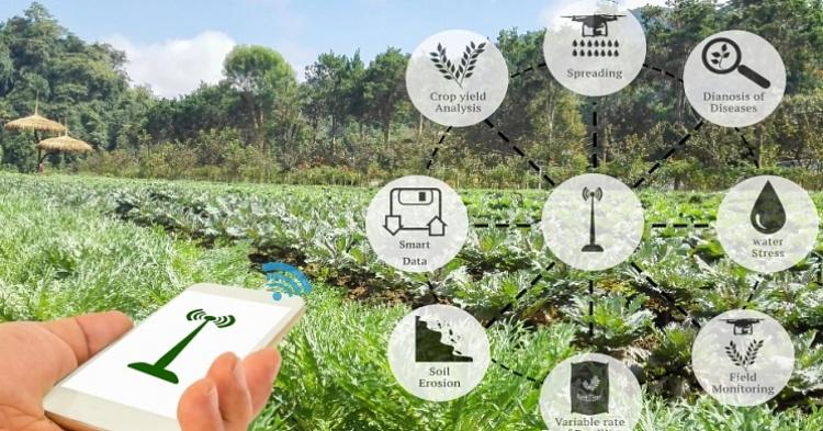 Обзор рынка сельское хозяйство