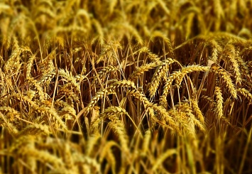 Партнерский материал. Trucker увеличит объем перевозок зерна в октябре до 100 тысяч тонн