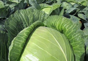 Обинновационных решениях вобласти производства овощей расскажут фермерам Поволжья