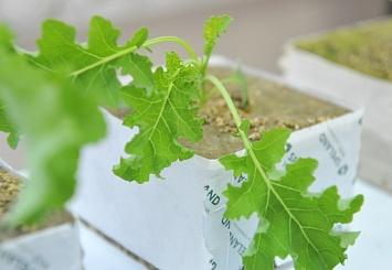 Реклама. Экология на вашем столе: как вырастить чистую во всех смыслах микрозелень