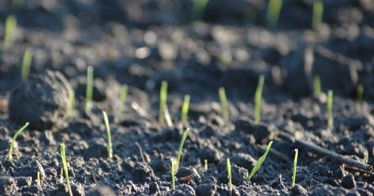 Убытки аграриев из-за падения цен назерно оцениваются в50 млрд рублей
