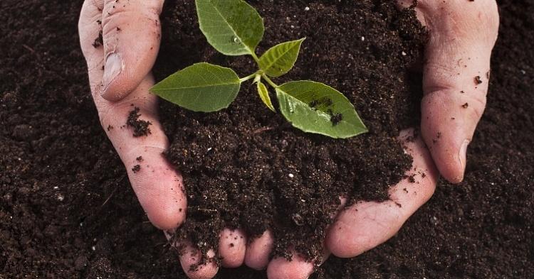Снижение плодородия земель
